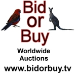 Company Logo of Bid Or Buy